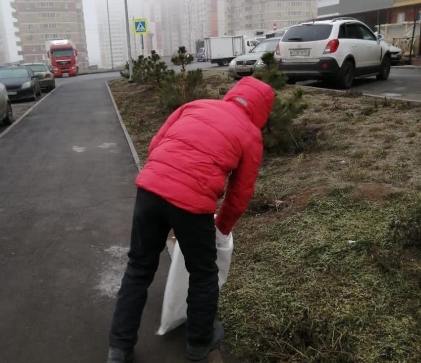 Высадка елочек в ЖК Суворовский. Фото 2.