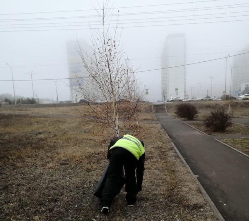 Высадка елочек в ЖК Суворовский. Фото 3.